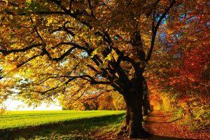 cropped-tree-779827_1920.jpg